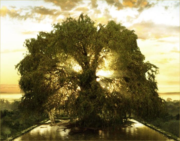 drevo_inet