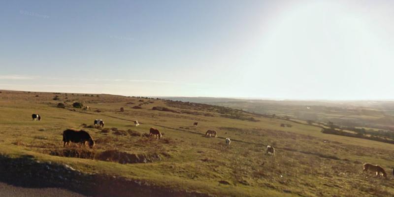 Девоншир-декабрь-пони-5