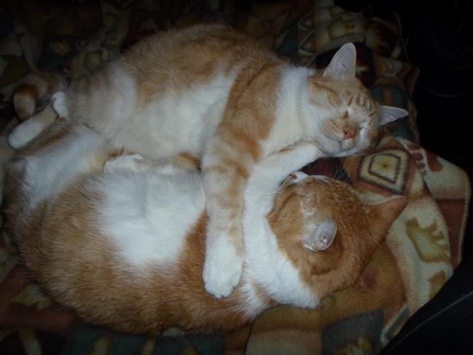 братцы котики