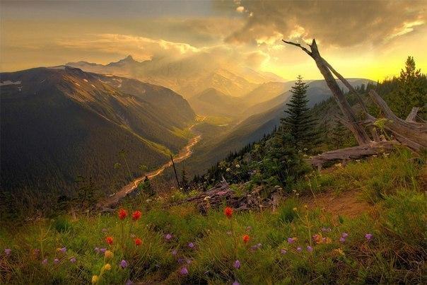 Национальном парке Маунт-Рейнир, Штат Вашингтон, США