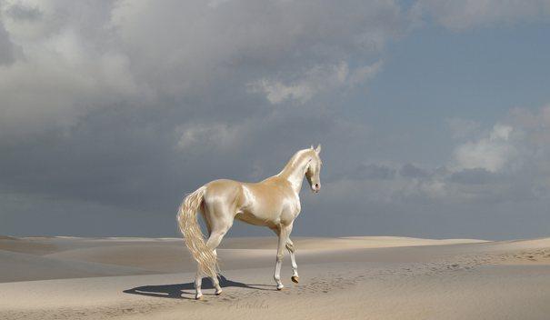 Кремовая ахалтекинская лошадь.jpeg