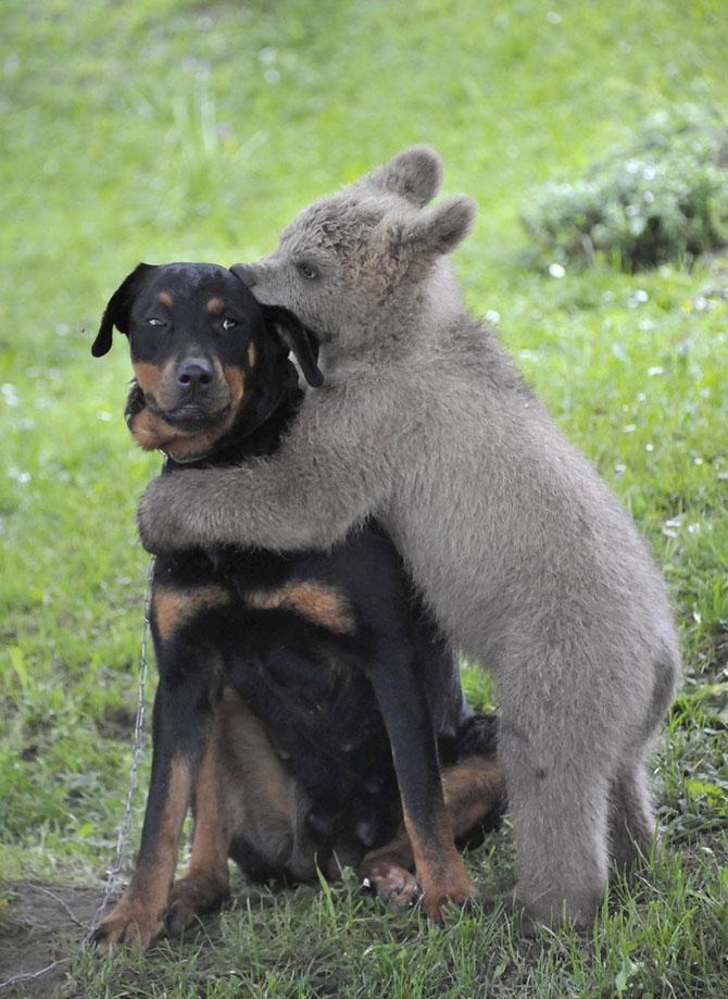 Медвежонок и собака, Словения