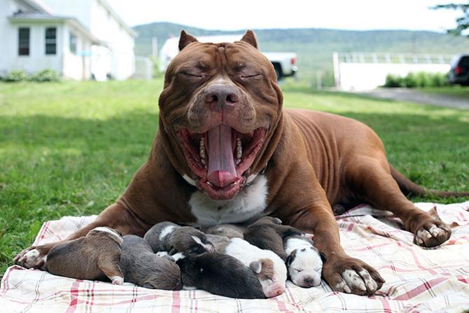 Про 10 самых преданных пород собак в блоге universal-inf