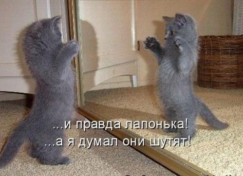 http://ic.pics.livejournal.com/universal_inf/69349960/2712801/2712801_original.jpg