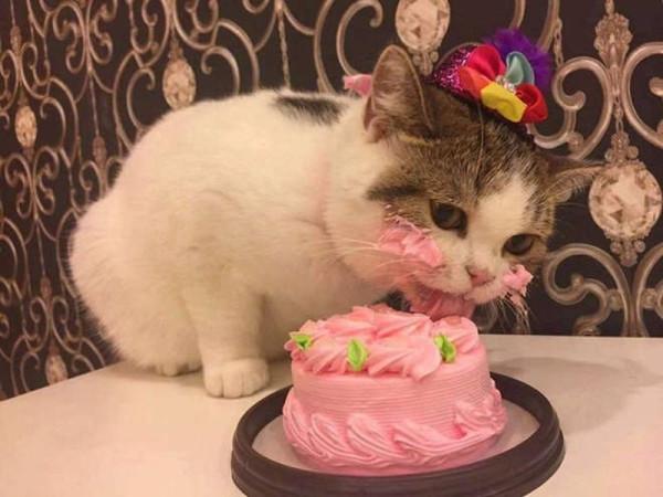 Кот есть тортик