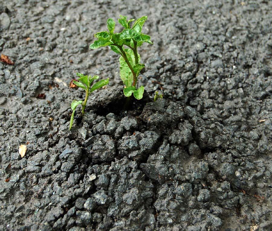 ростки нового сами пробьются сквозь асфальт