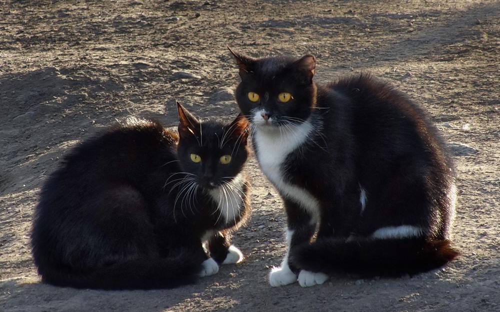 фотограф Челябинск фото кошки