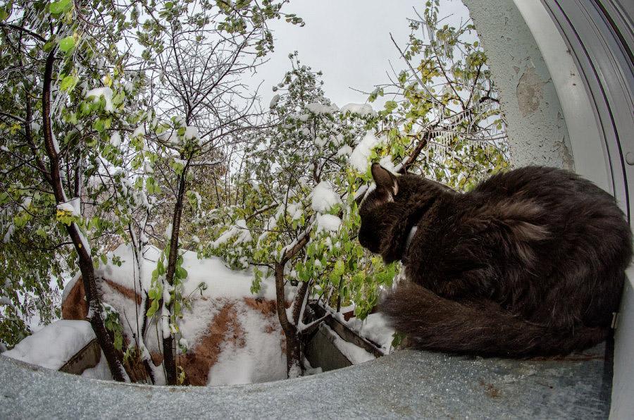 фотограф Челябинск кот фото