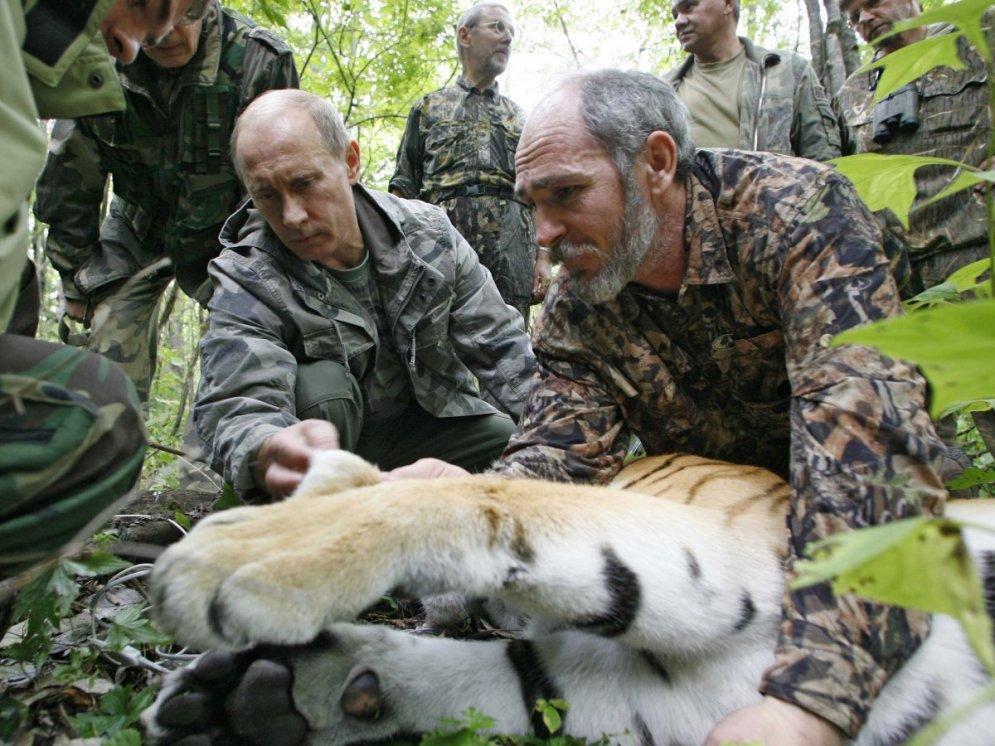 тигр Путин
