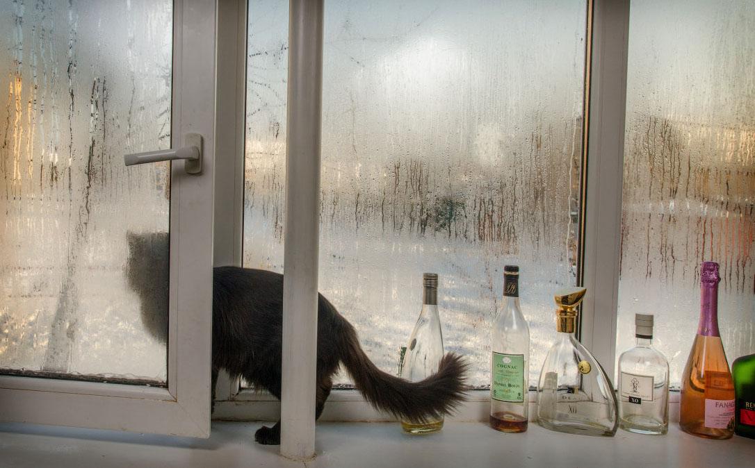 фотограф Челябинск кот Филипп