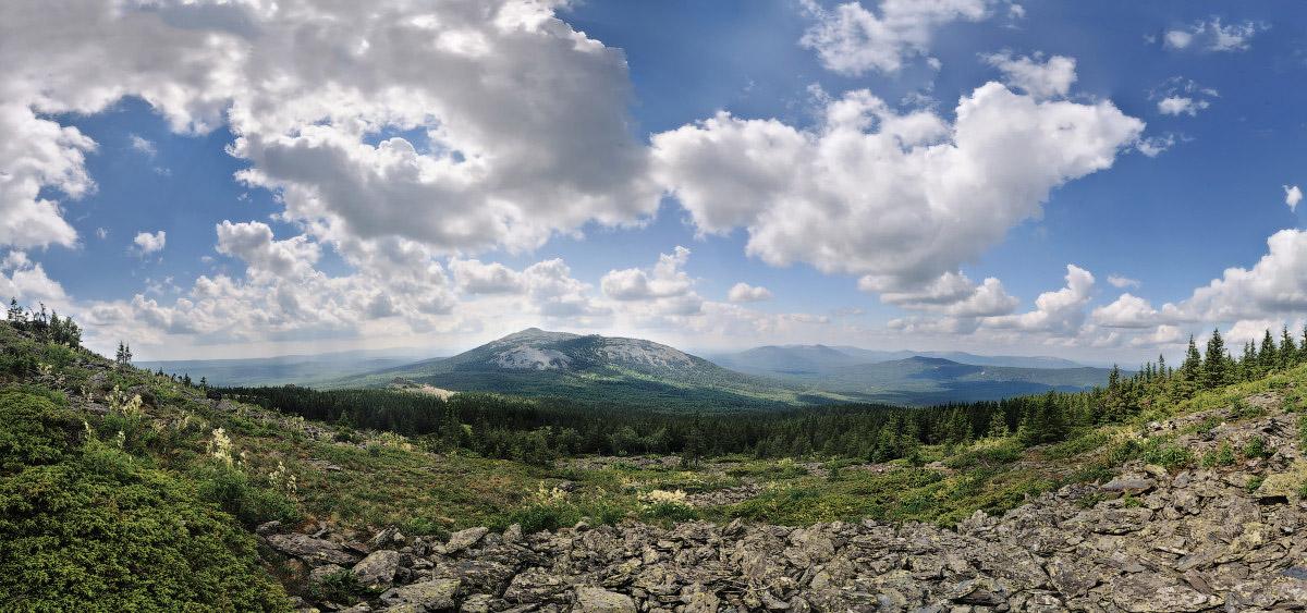 Нургуш цветы альпийской гречихи панорама - фотограф Челябинск