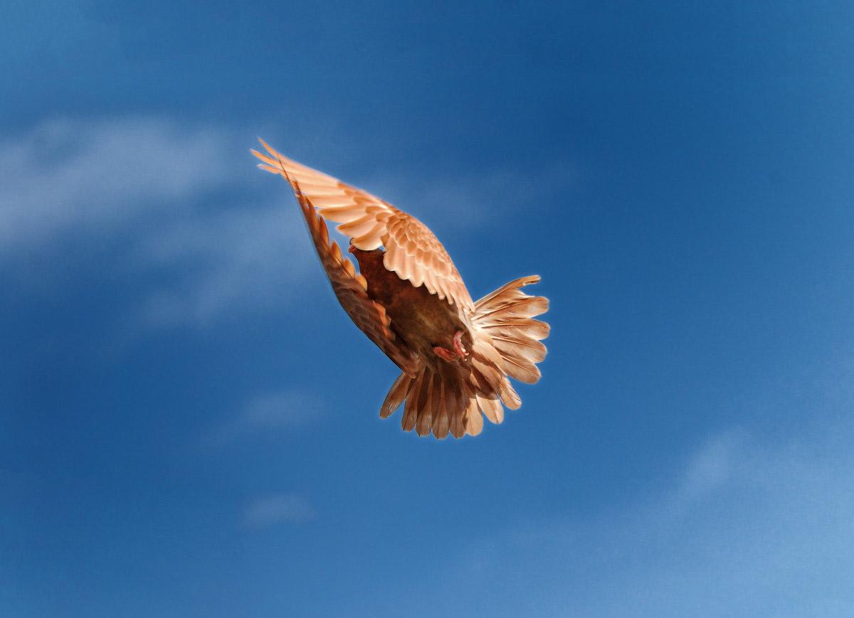 фотограф челябинск голубь в полёте
