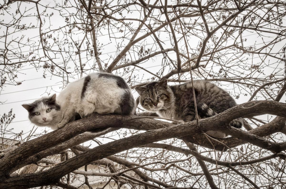 фотограф Челябинск кот, кошка фото