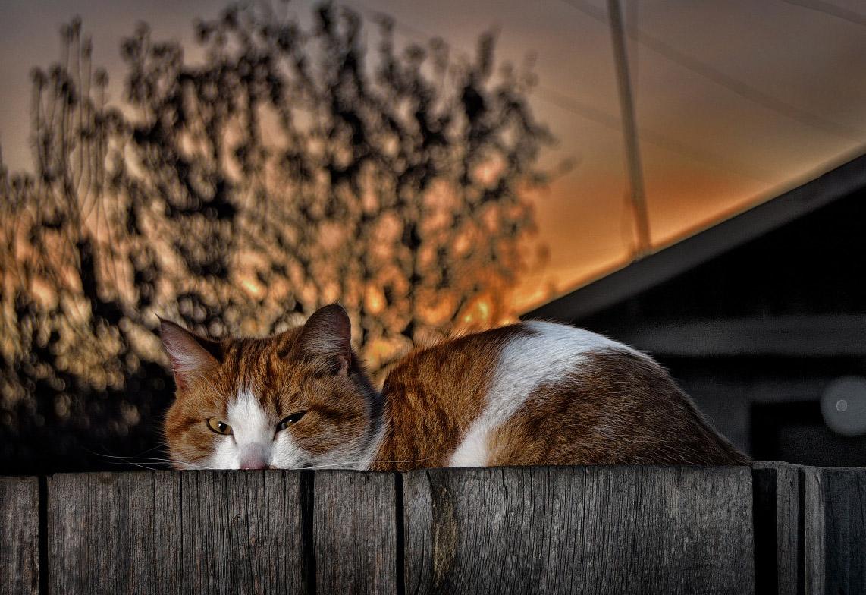 кошка - фотограф анималист Челябинск