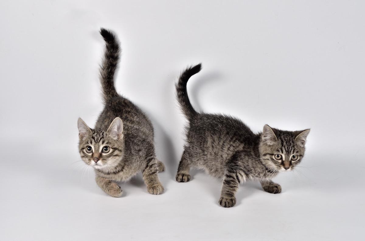 фото кошки - фотограф анималист в Челябинске 001