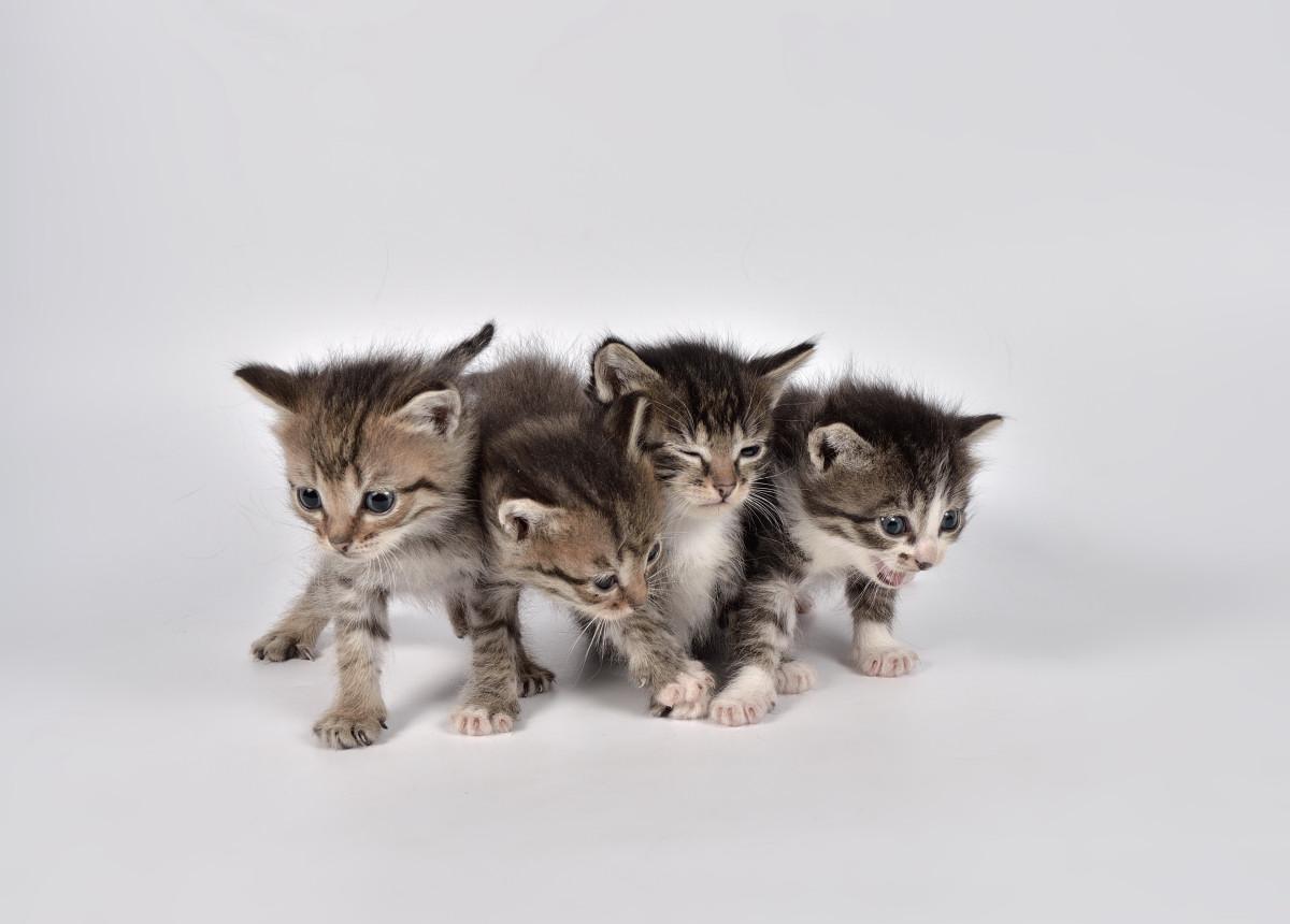 фото кошки - фотограф анималист в Челябинске 003