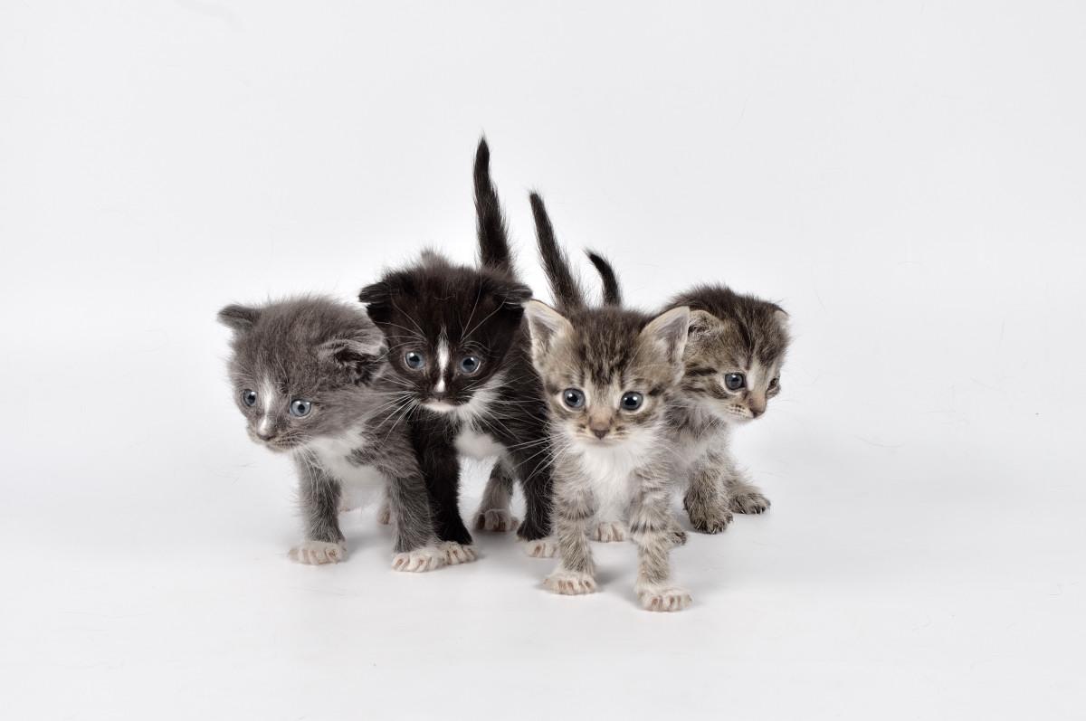 фото кошки - фотограф анималист в Челябинске 005