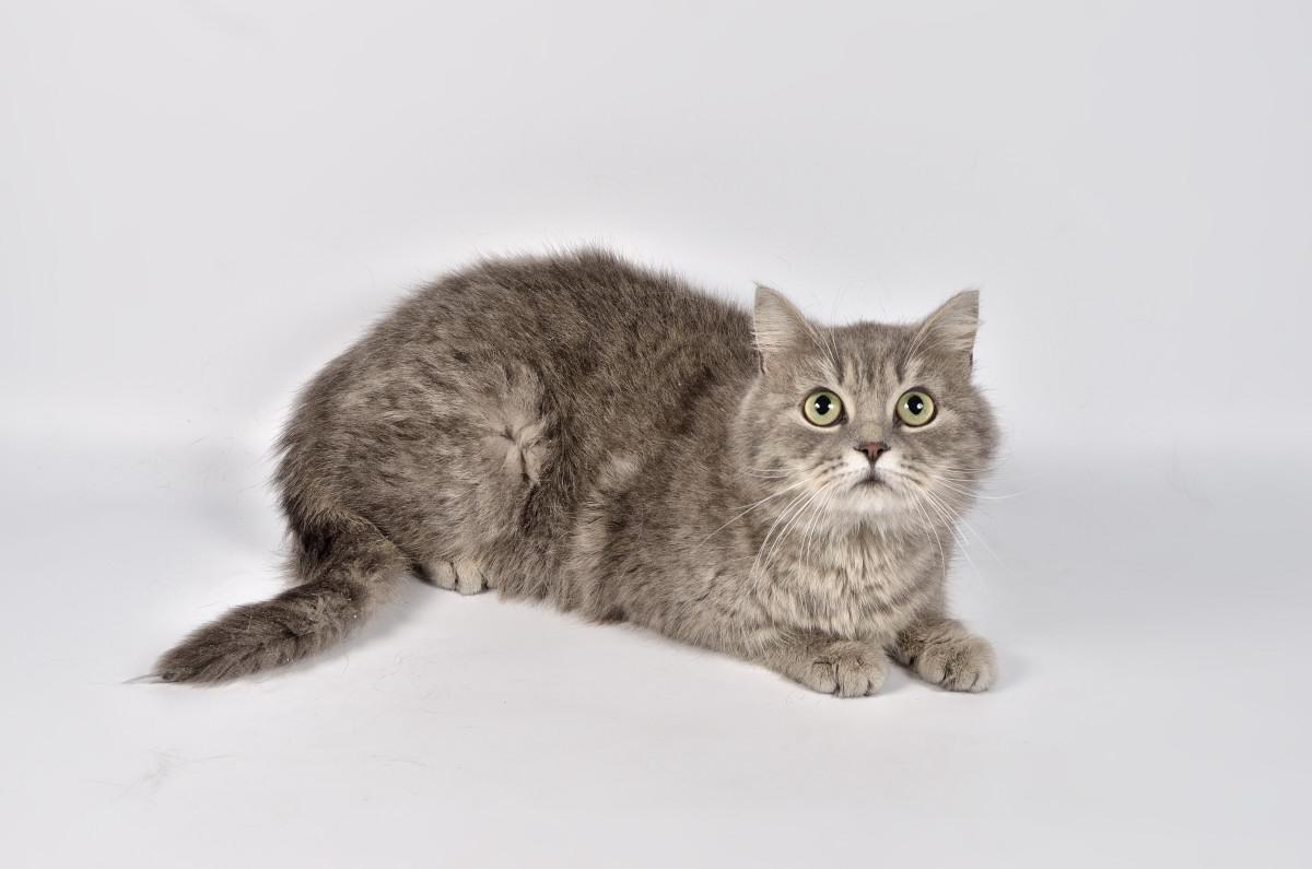 фото кошки - фотограф анималист в Челябинске 006