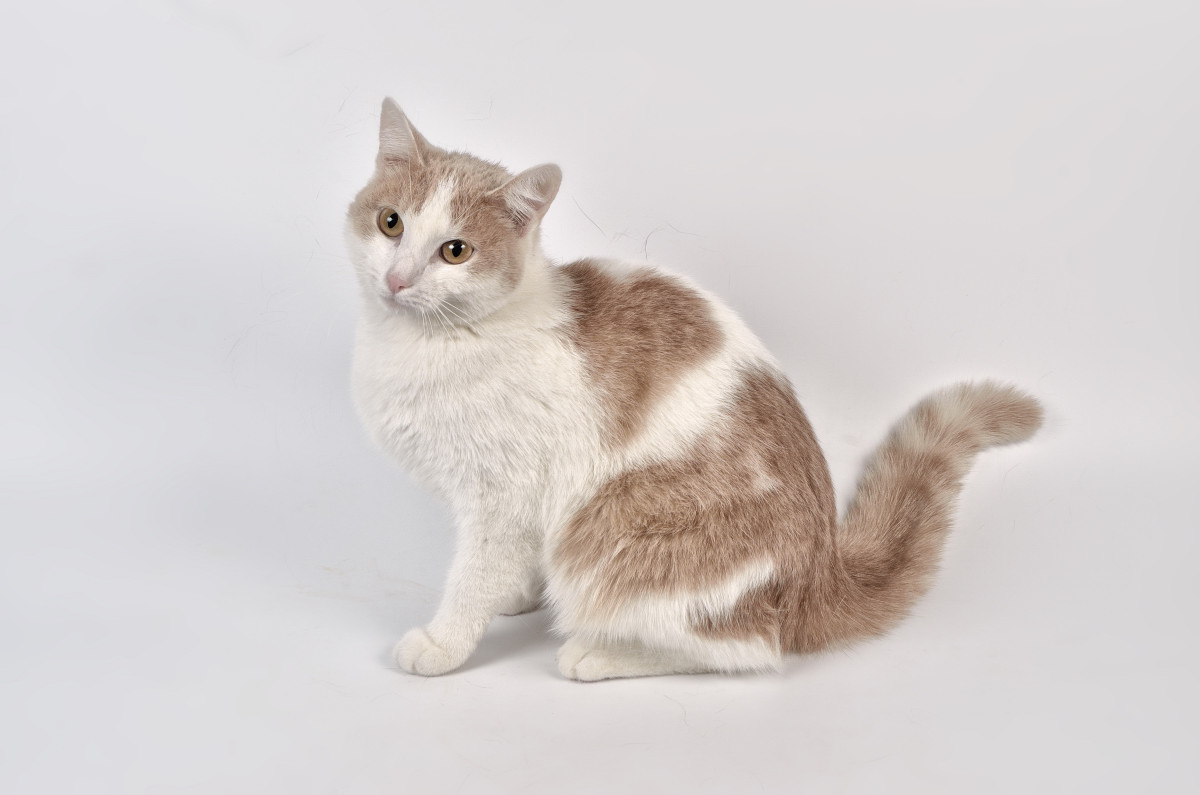 фото кошки - фотограф анималист в Челябинске 009