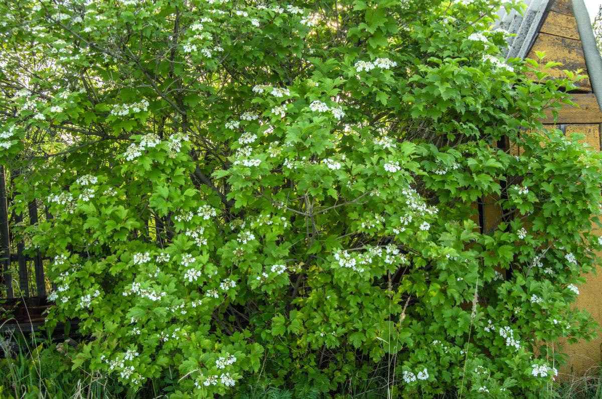 Картина найдена в заброшенном садовом домике - фотограф Челябинск5272