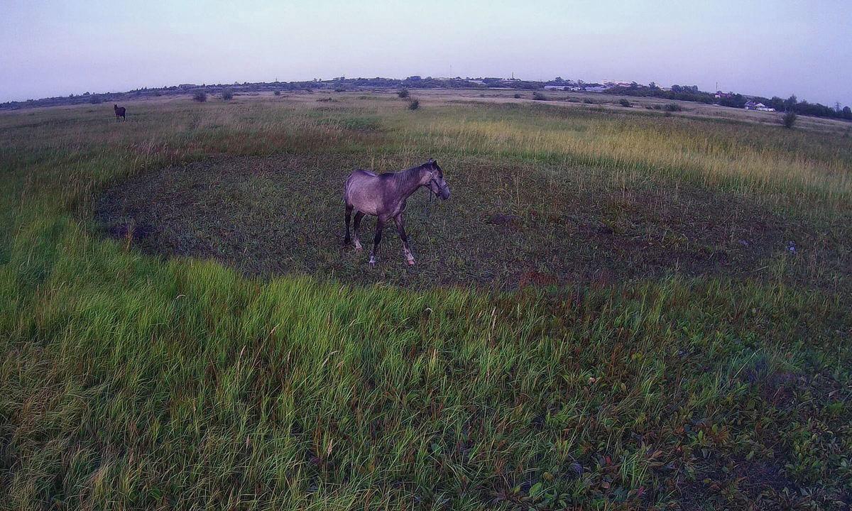 лошадка фотограф Челябинск квадрокоптер
