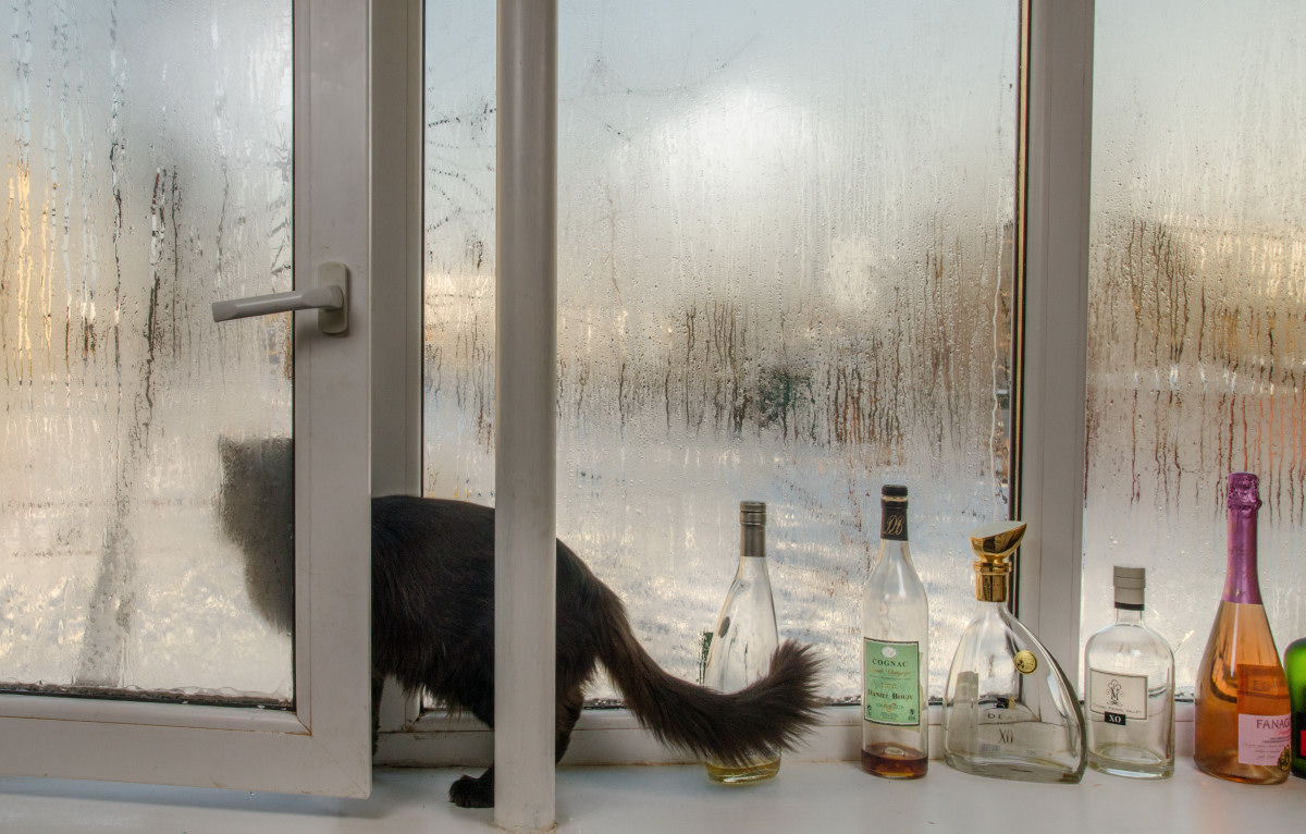 фотограф анималист Челябинск фото кошки