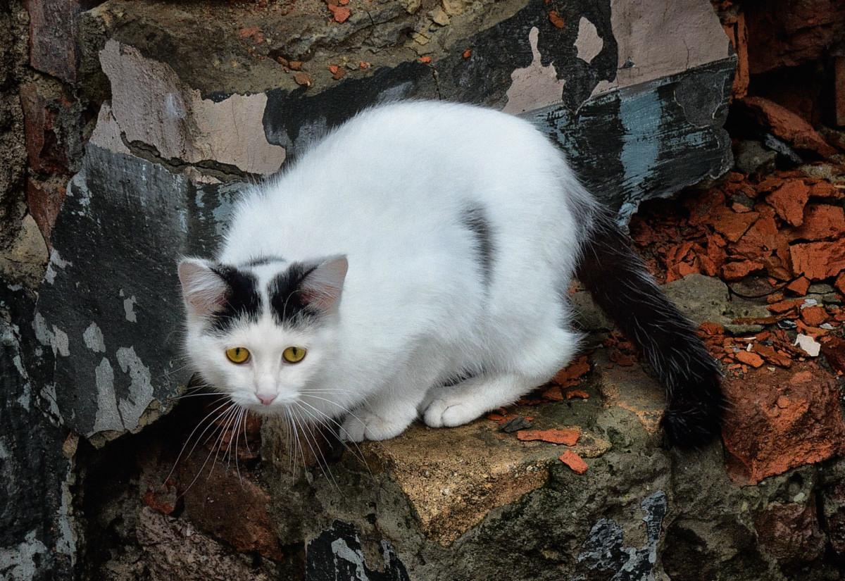 фото кошки фотограф анималист Челябинск