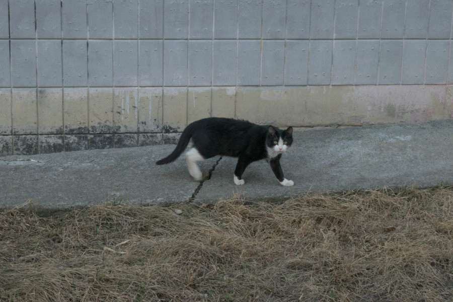 фотограф анималист Челябиск кошка дворовая