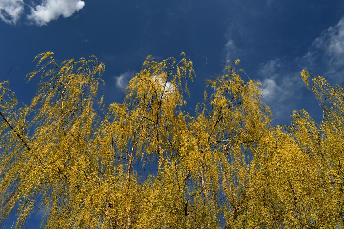 фотограф Челябинск  5165