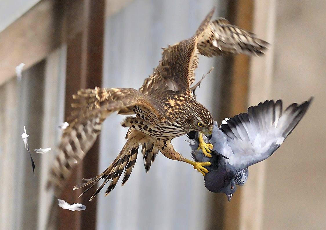 фото животные - птицы