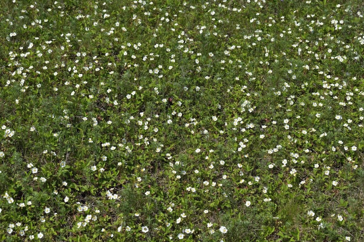 фотограф Челябинск  клубника цветёт! 6005