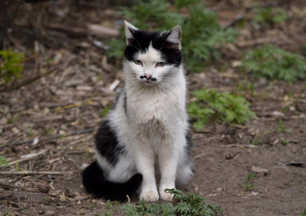 фотограф анималист Челябинск - фото кошки