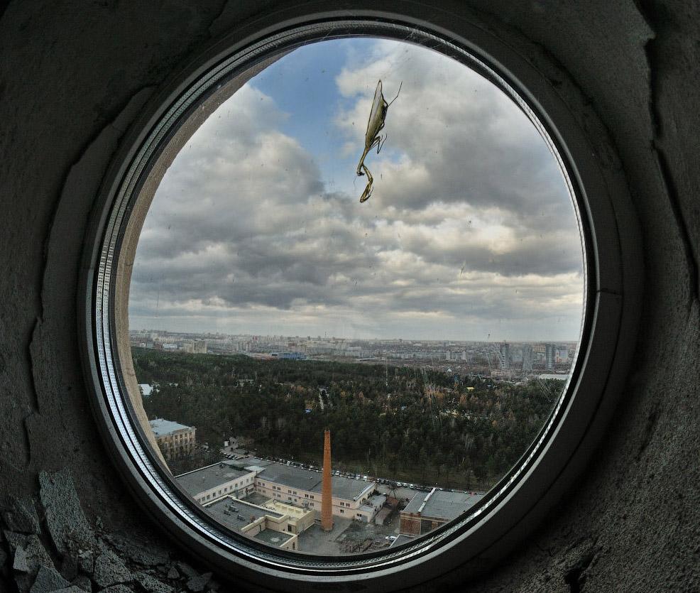 фотограф челябинск - Богомол в Челябинске