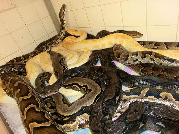 В доме жителя Нью-Йорка обнаружены 850 змей - Журнал хорошего настроения