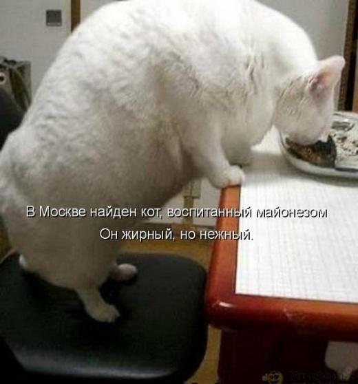 prikolnye-kartinki-zhivotnyx-s-podpisjami_18483_s__1