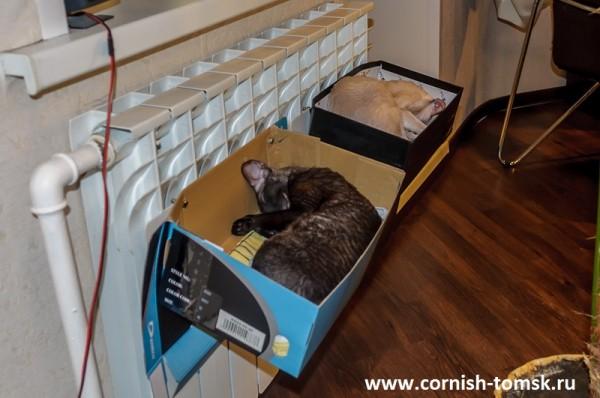 Лежак для кошки на батарею своими руками