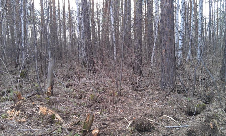 лес было