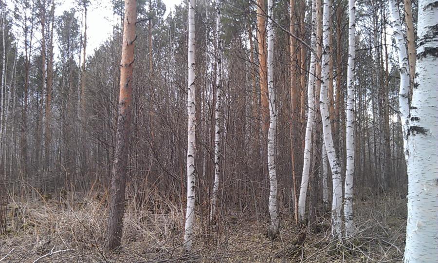 лес было2
