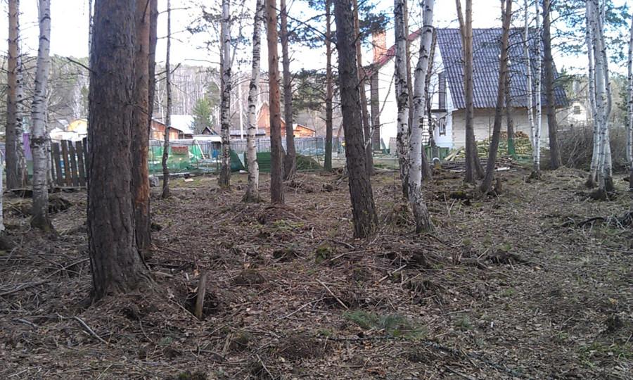лес стало