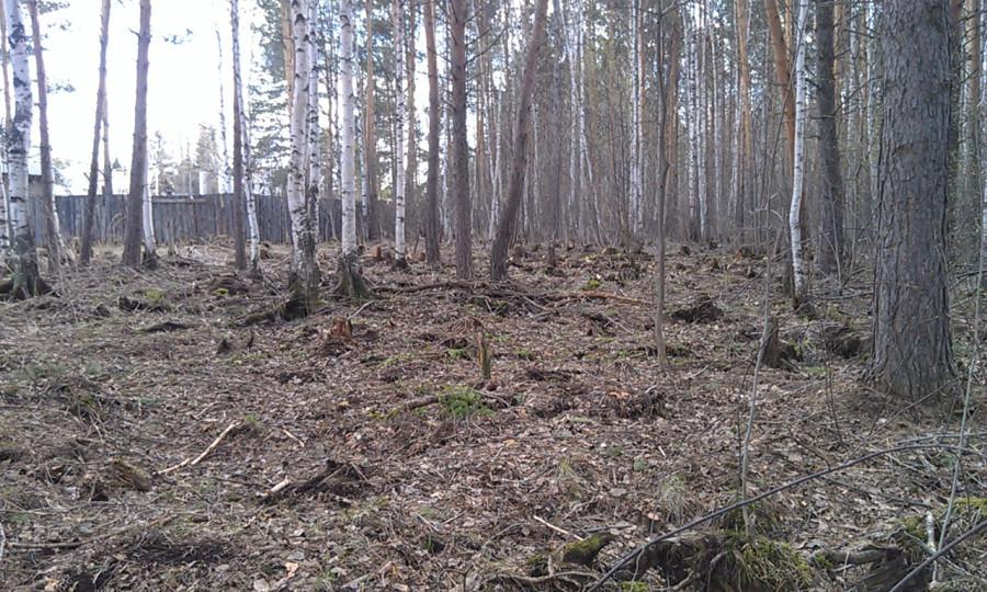 лес стало1