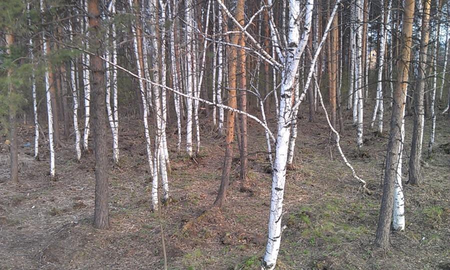 лес стало2