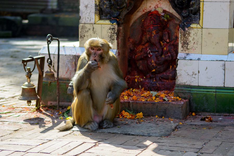 nepal95.jpg