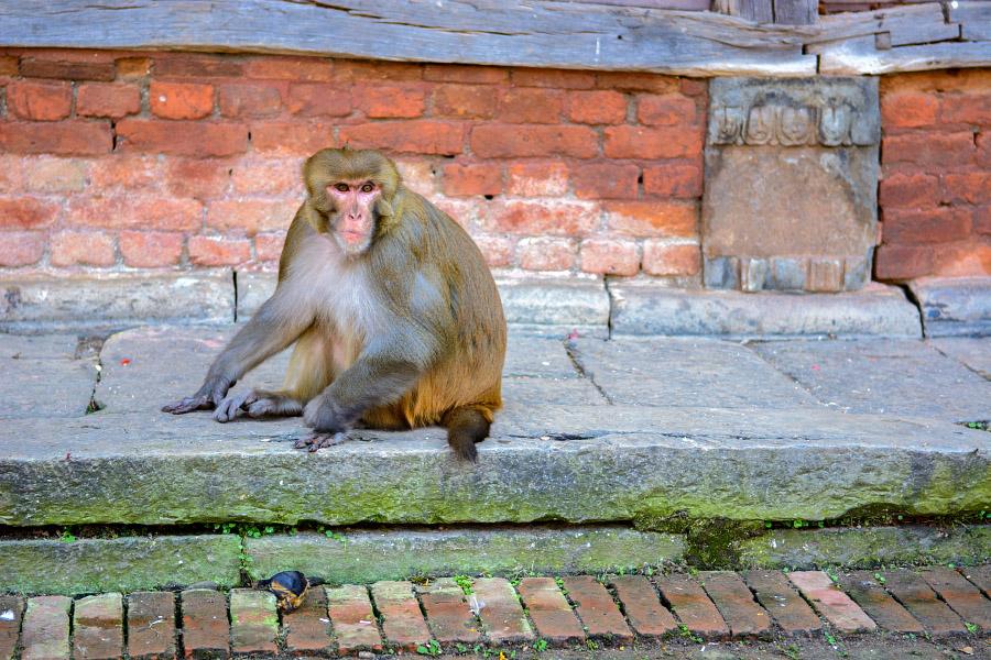 nepal96.jpg