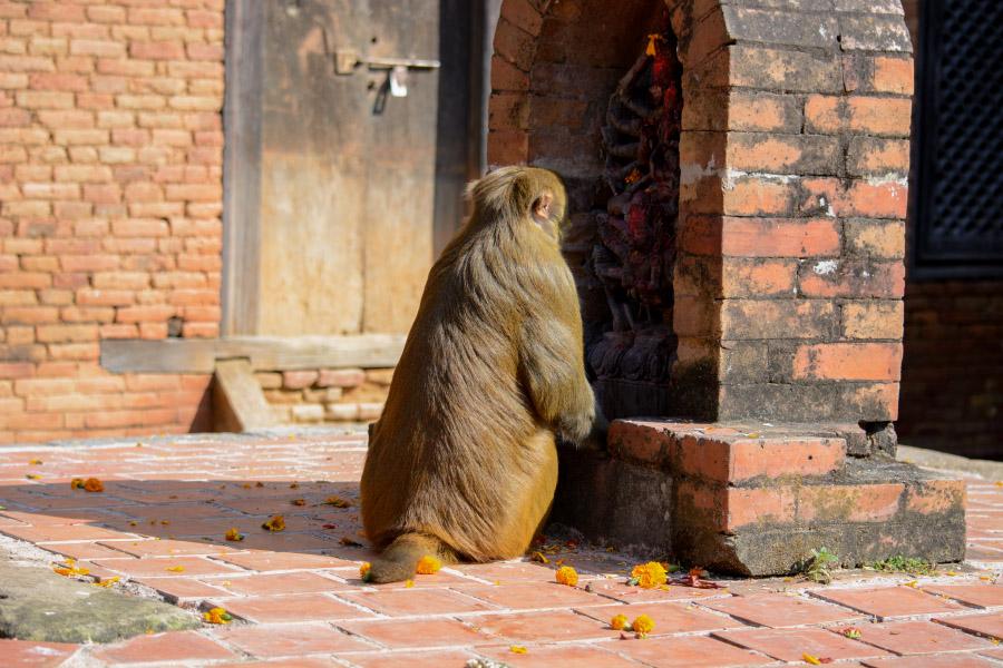 nepal99.jpg