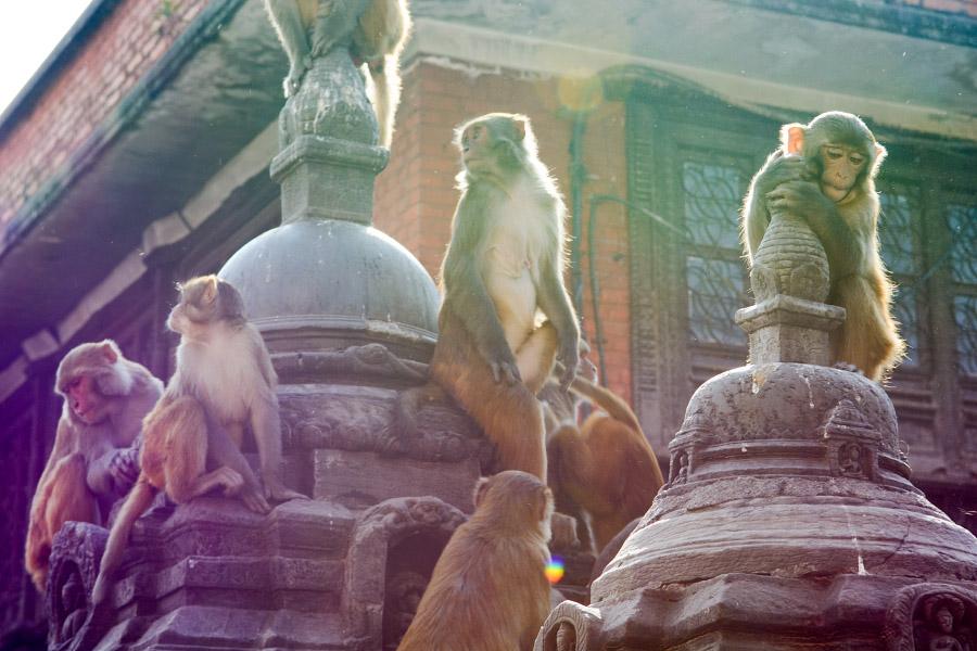 nepal434.jpg