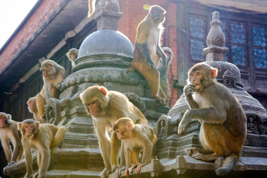 nepal436.jpg