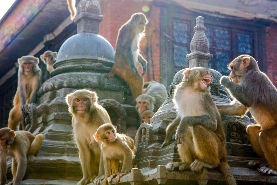nepal437.jpg