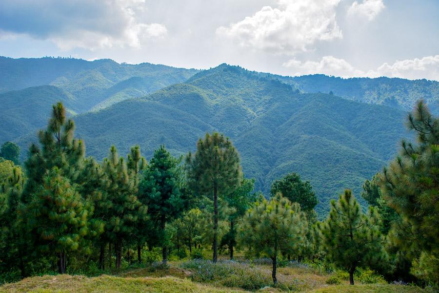nepal471.jpg