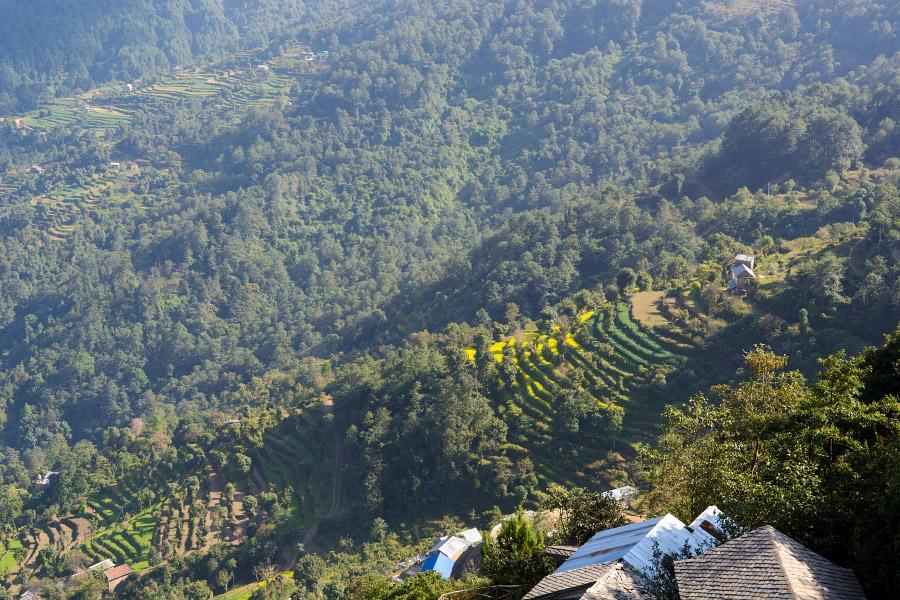 nepal525.jpg