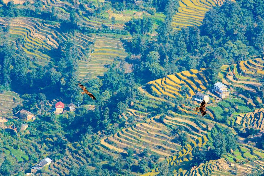 nepal545.jpg